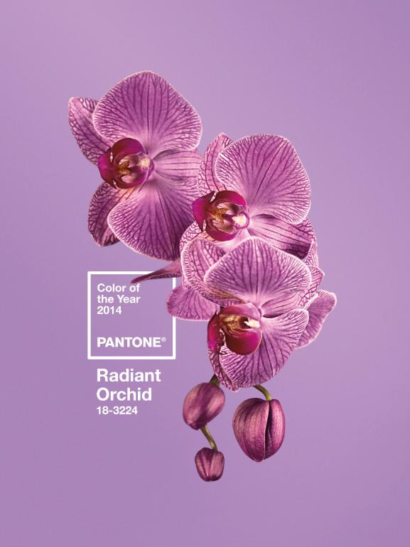pantone-color-of-2014