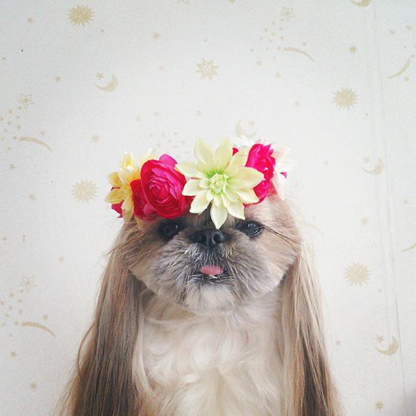 cada dia um penteado novo no cachorro  10