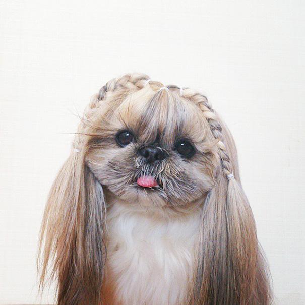 cada dia um penteado novo no cachorro 11