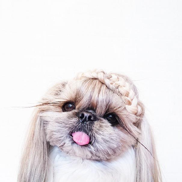 cada dia um penteado novo no cachorro 12