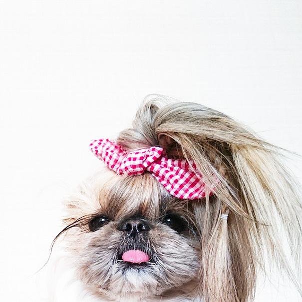 cada dia um penteado novo no cachorro  13
