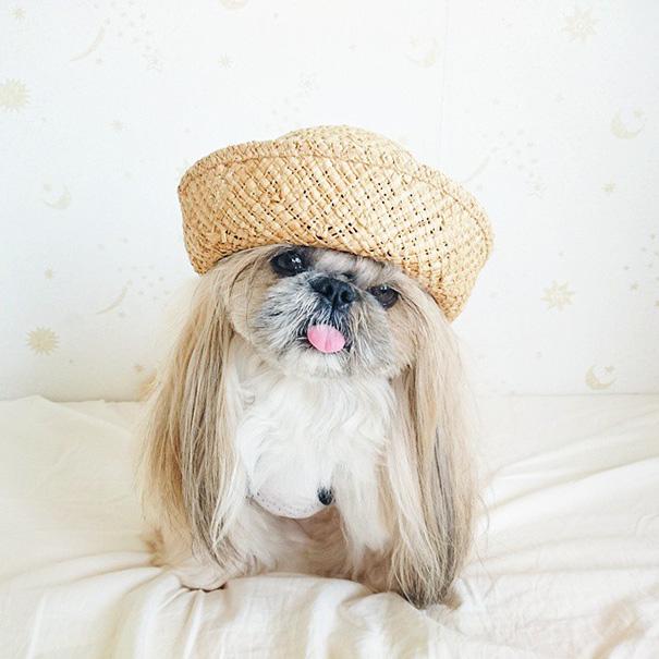 cada dia um penteado novo no cachorro 14
