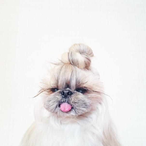 cada dia um penteado novo no cachorro 15
