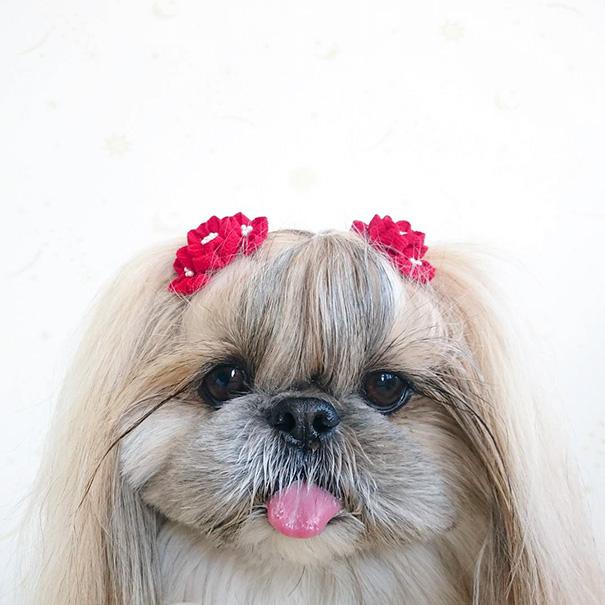 cada dia um penteado novo no cachorro 16