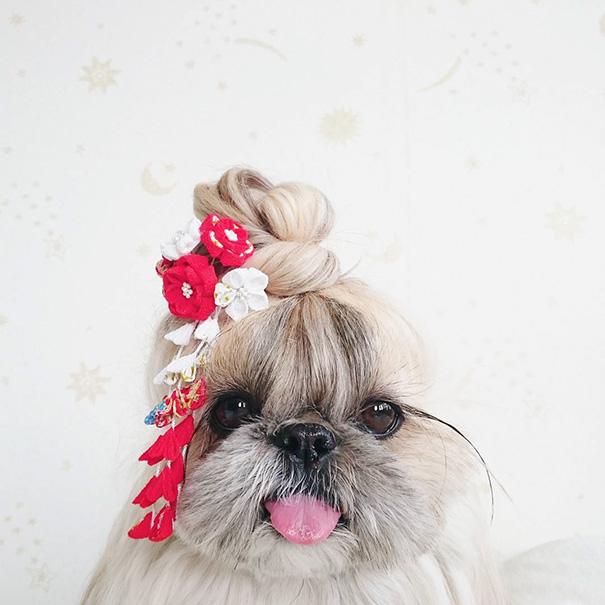 cada dia um penteado novo no cachorro 17