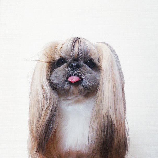 cada dia um penteado novo no cachorro 18