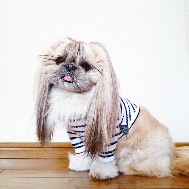 cada dia um penteado novo no cachorro 19