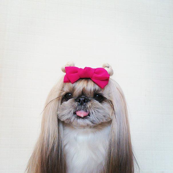cada dia um penteado novo no cachorro 20