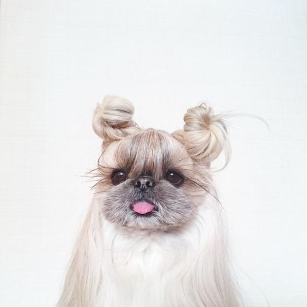 cada dia um penteado novo no cachorro 3