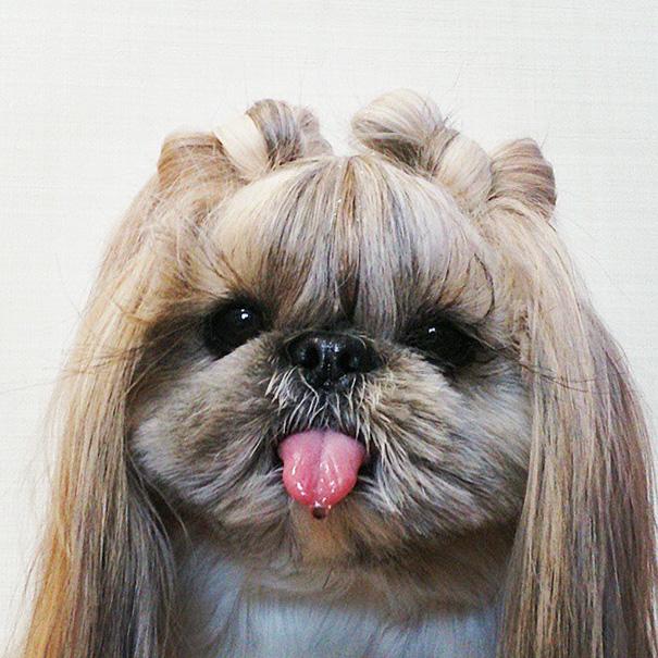 cada dia um penteado novo no cachorro 5