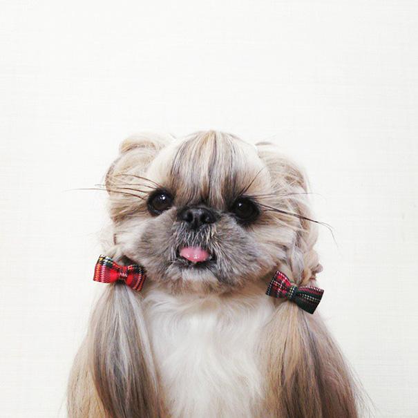 cada dia um penteado novo no cachorro 6