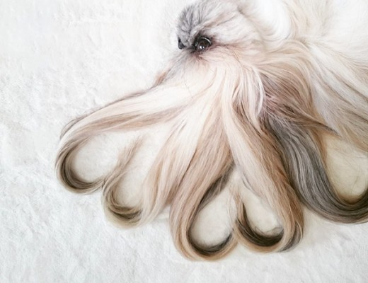 cada dia um penteado novo no cachorro  7