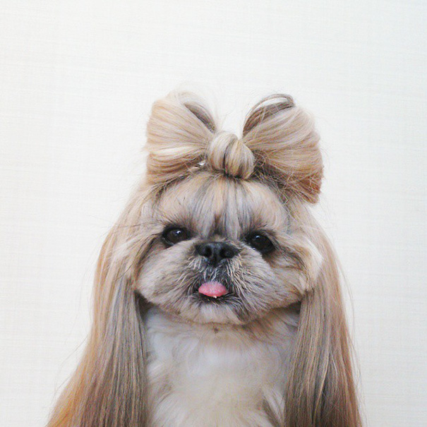cada dia um penteado novo no cachorro