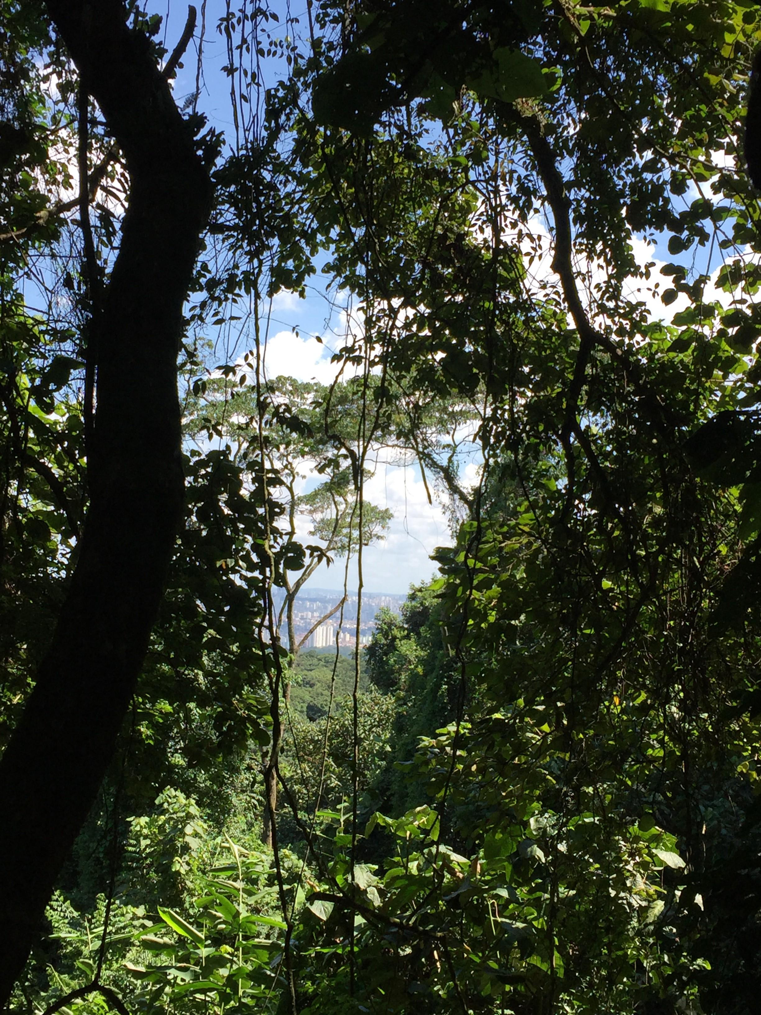 trilha da pedra grande parque estadual cantareira