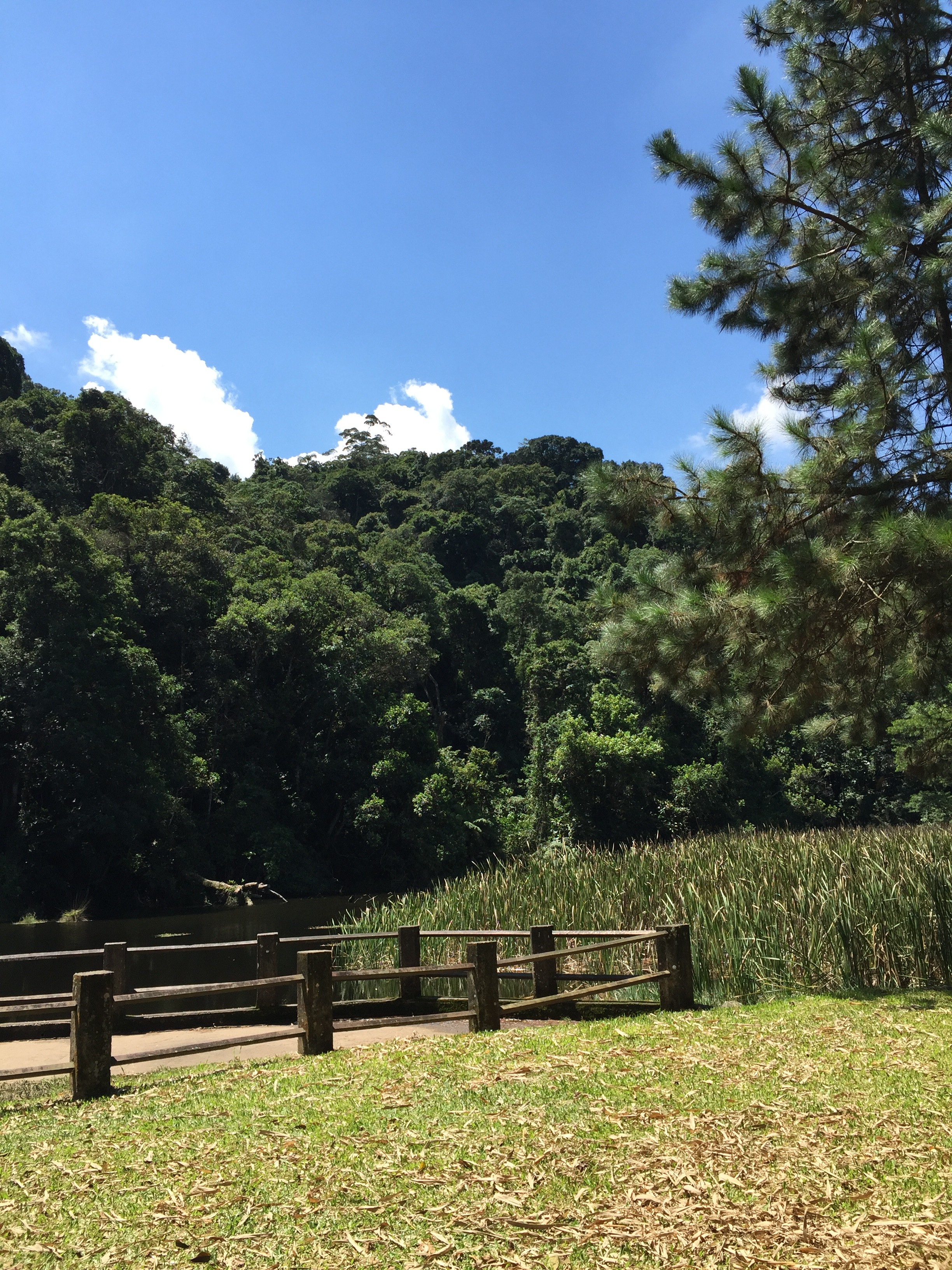 vista do lago das carpas