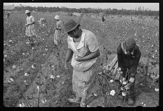 Trabalhadores na fazenda Alexander, Arkansas, colhendo algodão em 1935. Foto cortesia de Ben Shahn/Biblioteca do Congresso dos EUA.