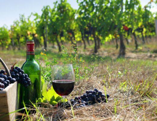 vinho-e-uvas