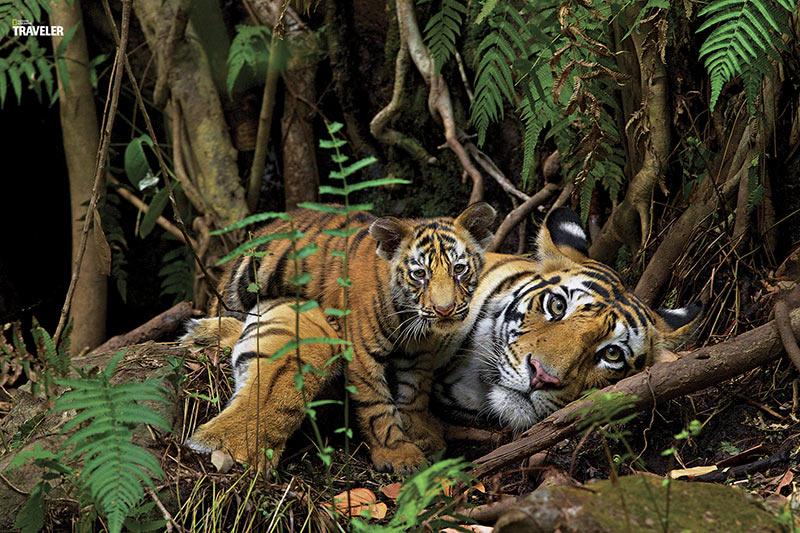 parque-nacional-no-centro-da-india