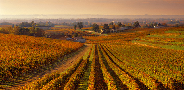 ca. 2006, St.-Emilion, France --- Vineyards near the town --- Image by © Grand Tour/Corbis