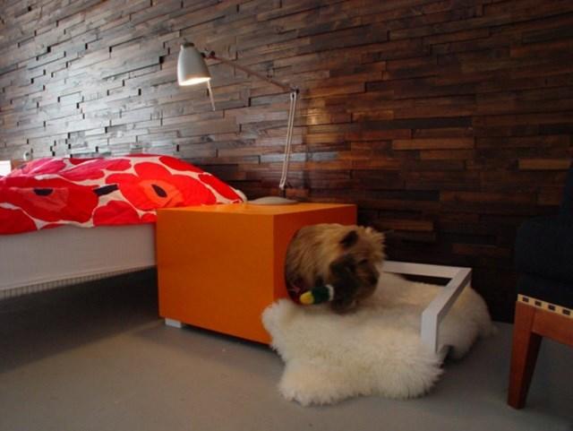 cômoda para cachorro no quarto