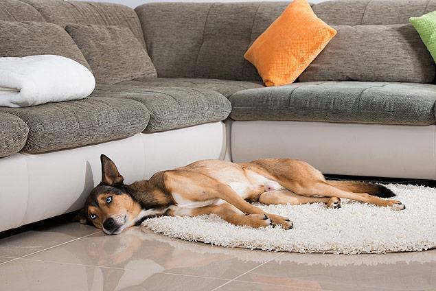 cachorro deitado no piso