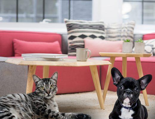 decoração para casa com pets