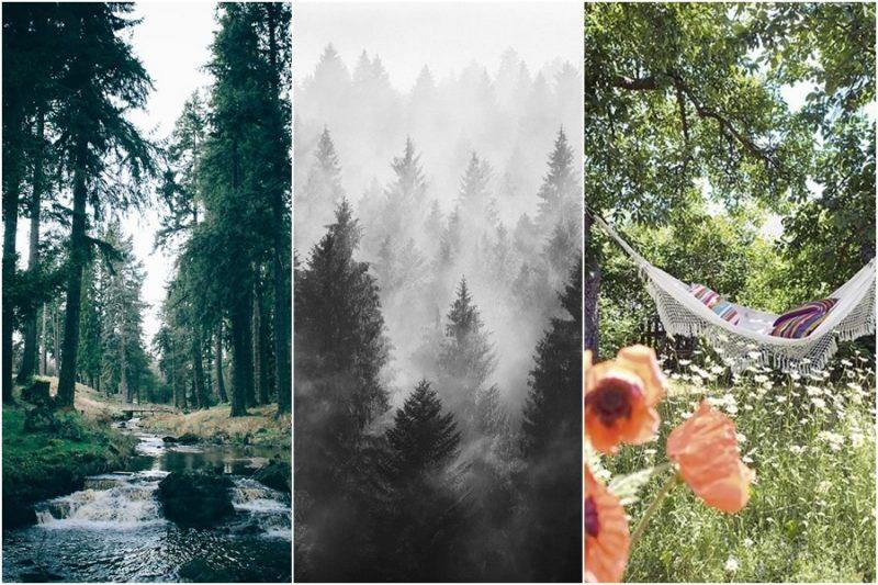 banho de floresta benefícios