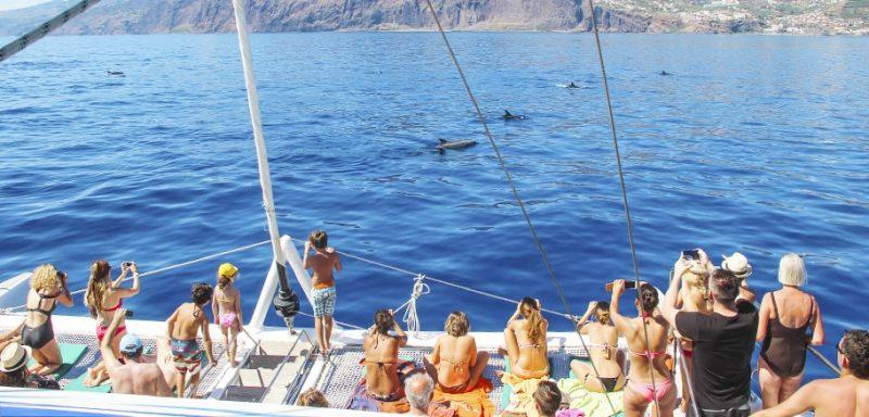 Observação dos golfinhos e baleias ilha da madeira
