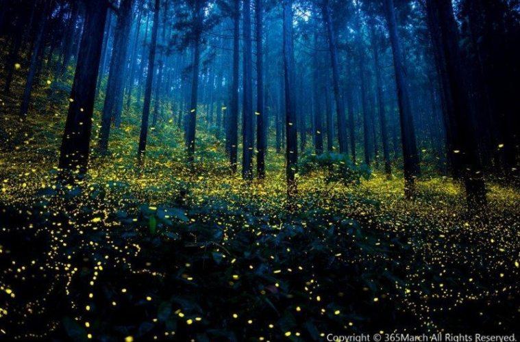Os incríveis jardins de vaga-lumes no Japão