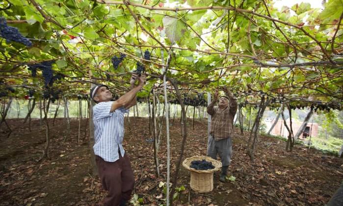 vinho ilha da madeira