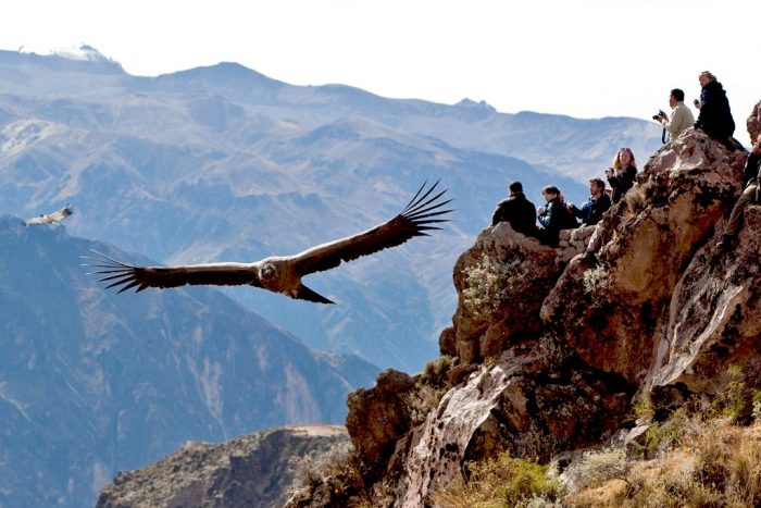 condor canyon peru