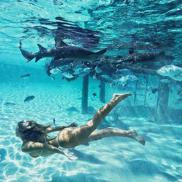 nadando com tubarões