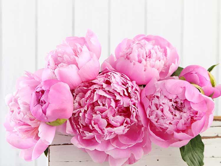 Tipos-de-flores-para-casamento