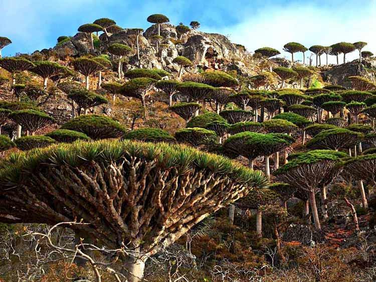 Arquipélago-de-Socotra