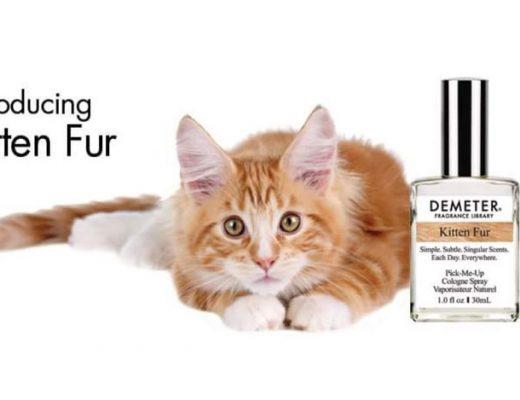 perfume-com-cheiro-de-gato
