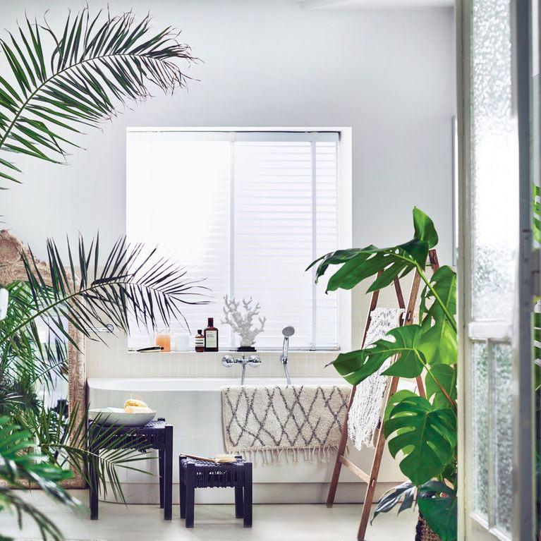 10-plantas-perfeitas-para-iluminar-seu-banheiro