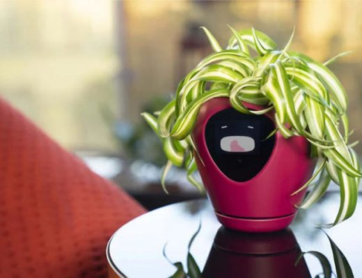 vaso-inteligente-mostra-como-está-a-planta