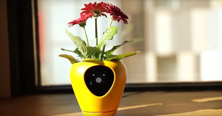 vaso-inteligente-para-plantas