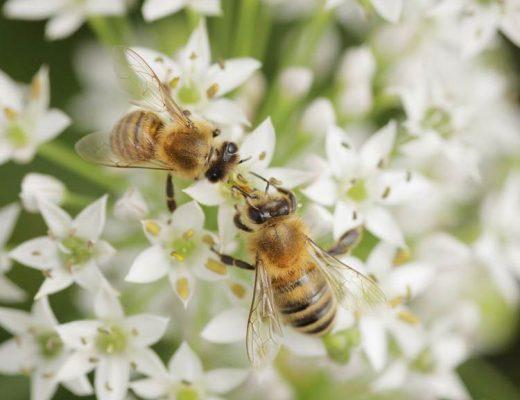 veneno-de-abelha-nos-cosmeticos