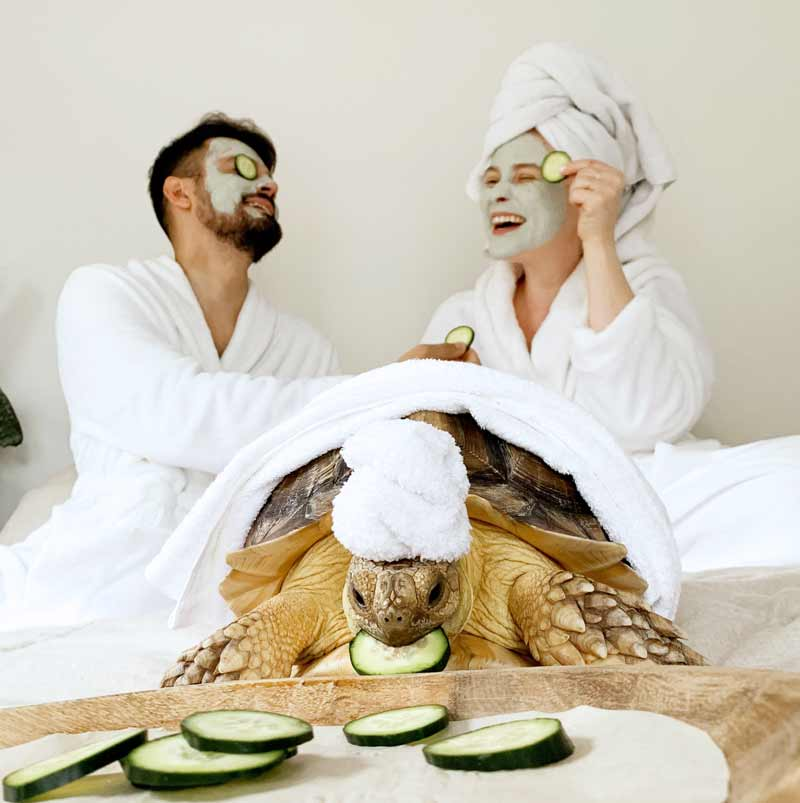 fotos-com-tartaruga
