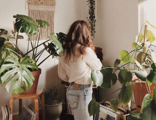 cuidar-de-plantas-apartamento