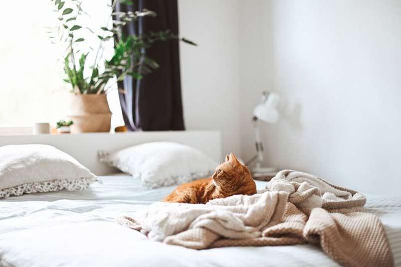 gato-na-cama