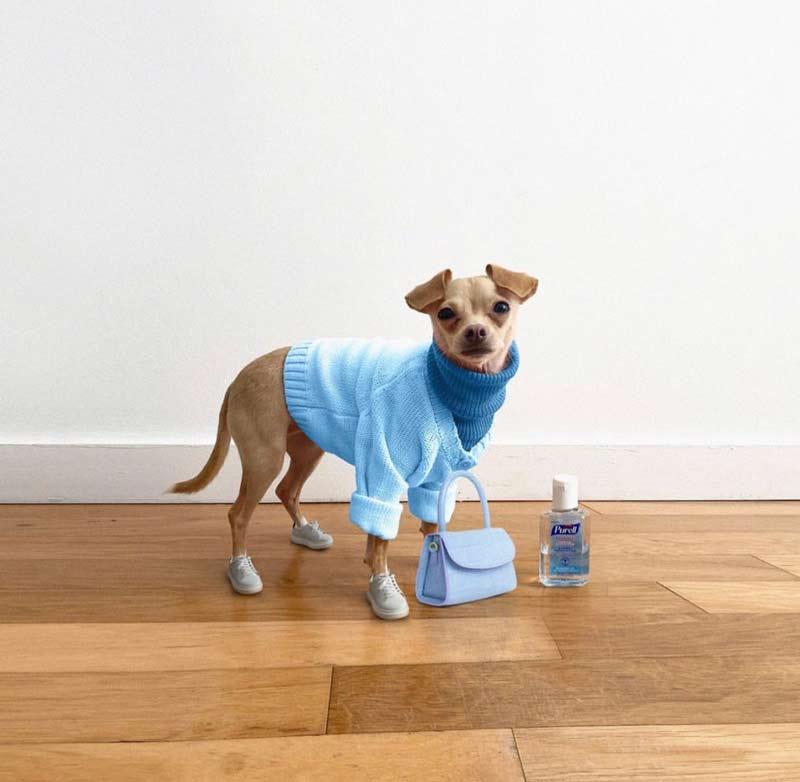 cachorros-com-roupas-fofas