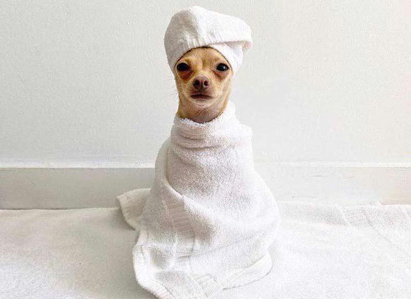 cachorros-estilosos-instagram