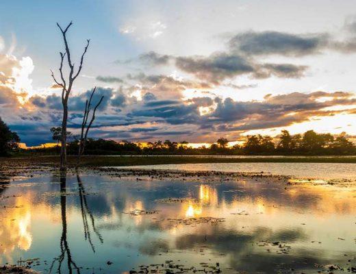 pantanal-amazonia
