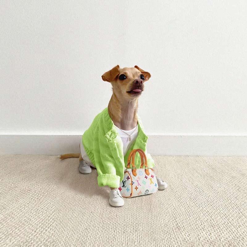 roupas-estilosas-cachorros