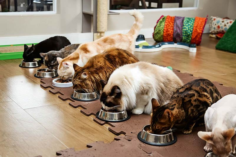 cafe-com-gatos-brasil-endereco