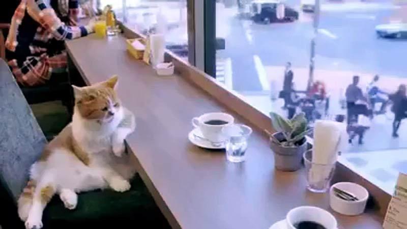 cafe-com-gatos-brasil