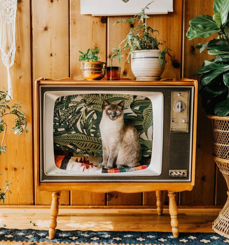 cama-para-gatos-tv-retro