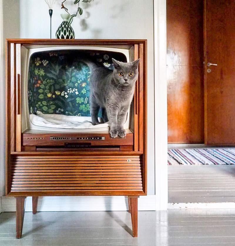 gatos-cama-tv-retro